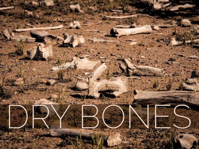 img_Dry Bones